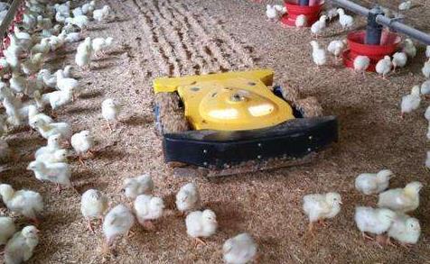 法國初創公司獲300萬歐元融資 通過機器人技術改善家禽健康